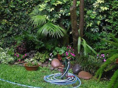 10 Plantas De Sombra Para Su Jardin Ideas Para El Hogar - Plantas-exterior-sombra