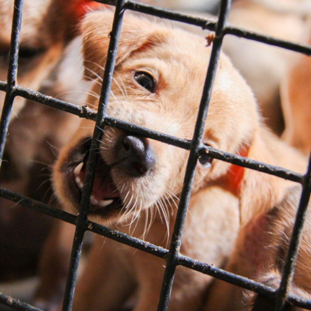 TierschutzMagazin Jetzt kostenlos anfordern! (mit