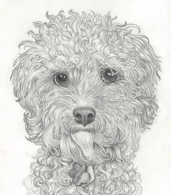 Pencil Dog Portrait Custom Drawing Of Your Pet Dog Pencil Portrait Of Any Type Of Dog From A Photograph Pintura Perro Como Dibujar Un Perro Dibujos De Perros