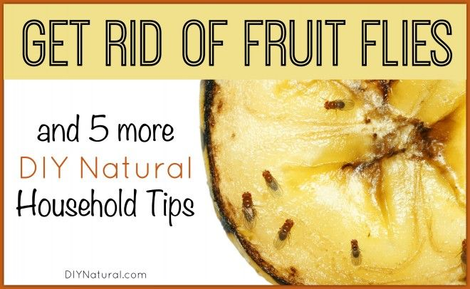 Get rid of fruit flies and learn 5 other natural household tips--like getting rid of mold/mildew, reducing pet dander, and keeping pollen out of the house.
