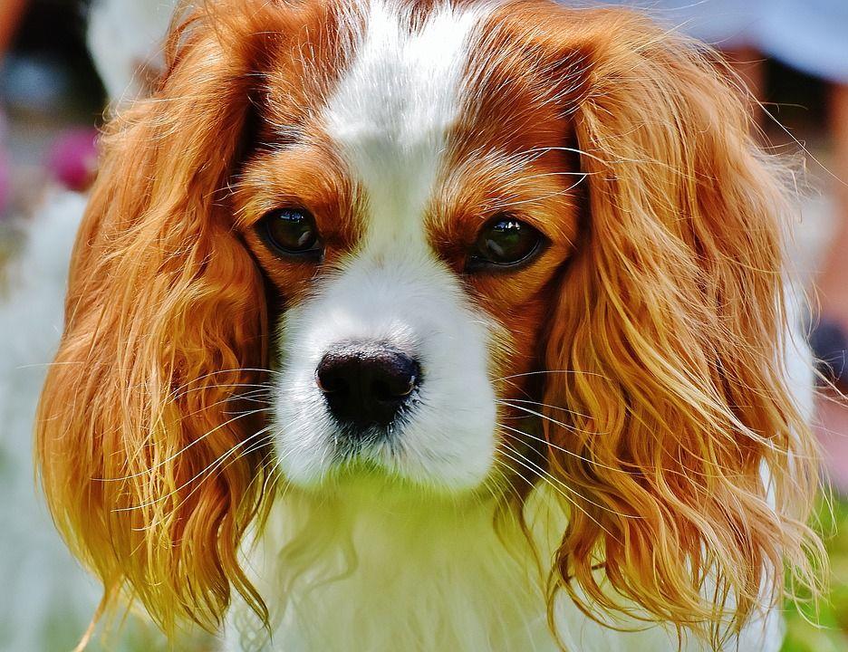 Pin Van Bobe V Op Kutya Puppy Training Foto S Hondjes