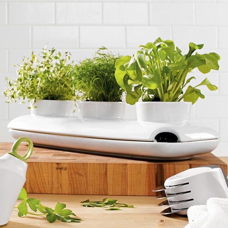 Sagaform Stoneware Triple Herb Pot | Indoor herbs, Plants and ...