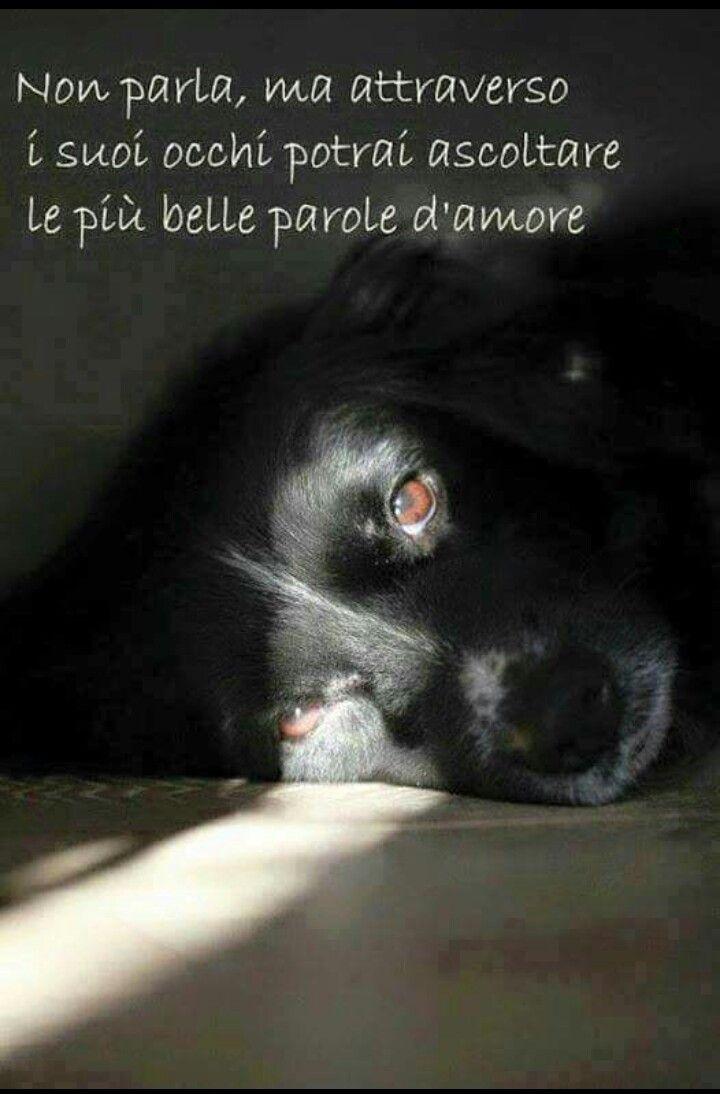 Gli Animali Citazioni Sui Cani Citazioni Sugli Animali E