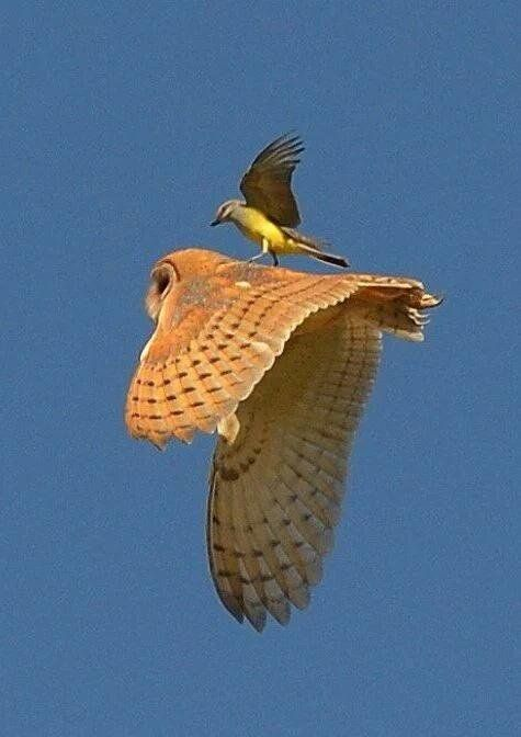 """flyingofbirds-17: """"Source :flying of birds """""""