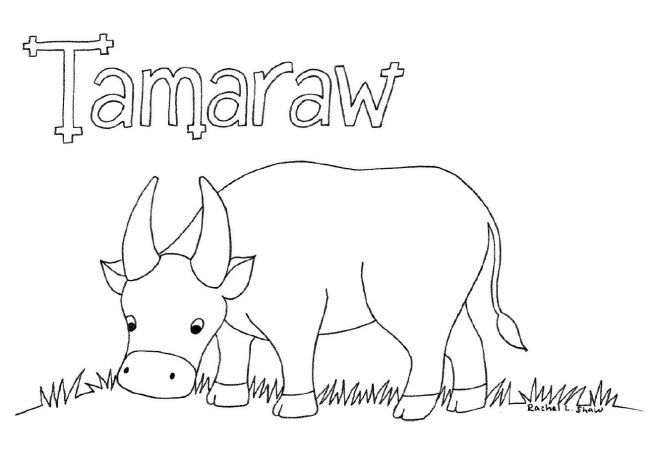 Colour A Tamaraw Coloring Pages Color Mindoro