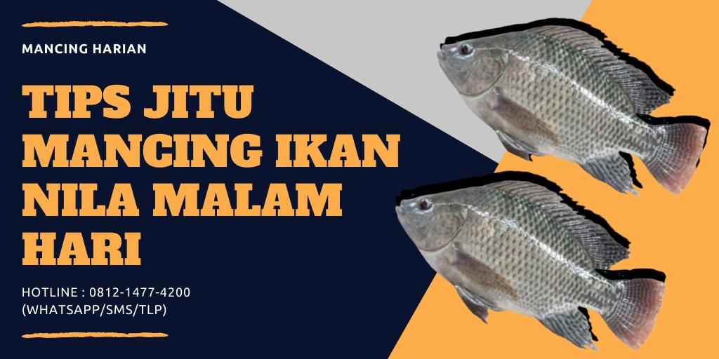 Tips Jitu Mancing Ikan Nila Malam Hari Dijamin Auto Strike Ikan Malam Babon