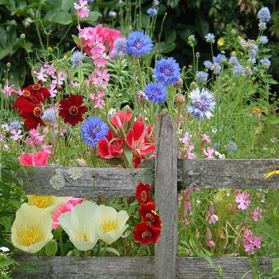 Cottage Garden Meadow Flower Flowers australia, Meadow