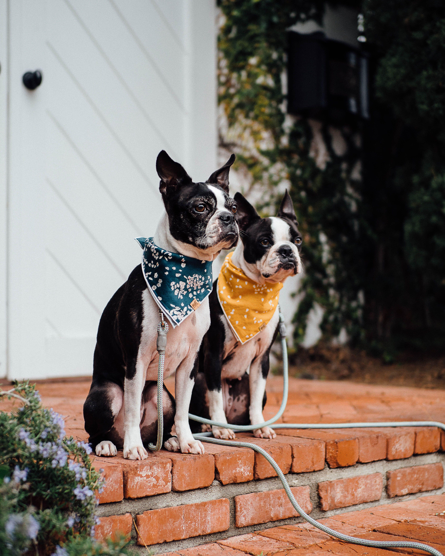 Hundehalstuch / günstig kaufen Hundebilder