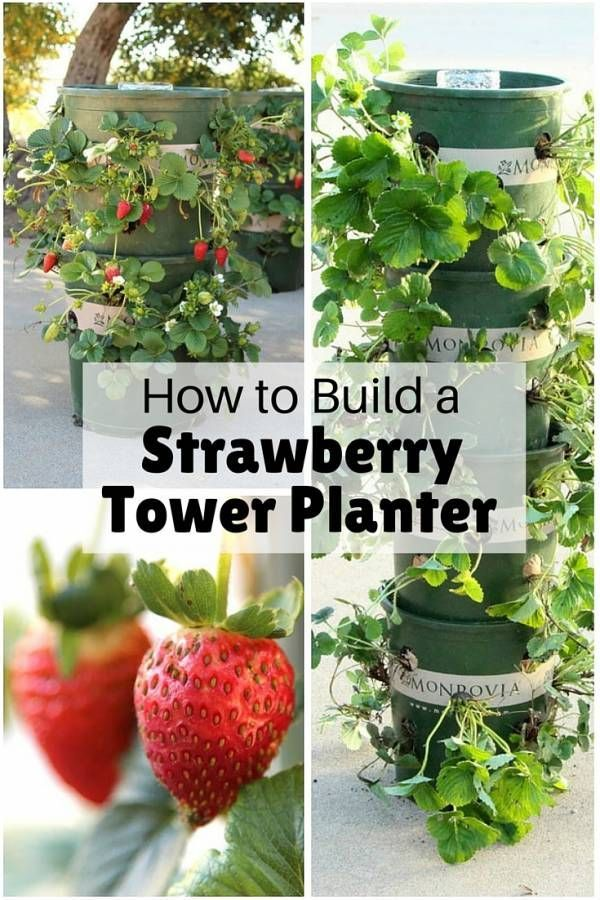How To Build A Strawberry Tower Planter Strawberry Planters Diy Strawberry Plants Strawberry Tower