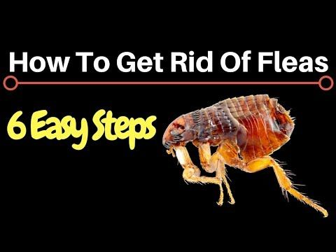 94d0459f7bec7204ba952c38b0afea69 - How To Get Rid Of Termites Permanently At Home