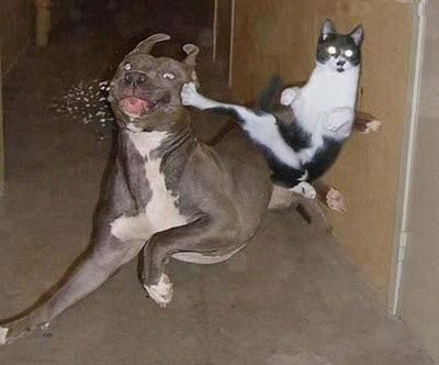 """Cat kicks the snot out of dog- literally.  Crescent kick to the head- whap!  """"I SAID stay away from my food bowl!"""""""