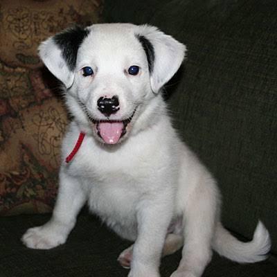 Beautiful Pet Anime Adorable Dog - 94d0c840cc40a687ba07a3923d3b09dc  Best Photo Reference_89721  .jpg