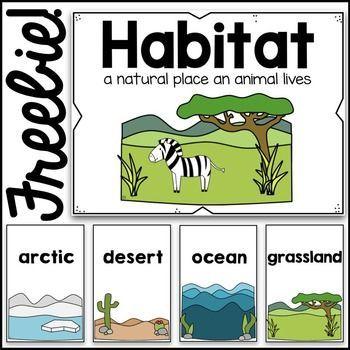 Habitats Poster Cards Preschool Science Kindergarten Science Homeschool Science
