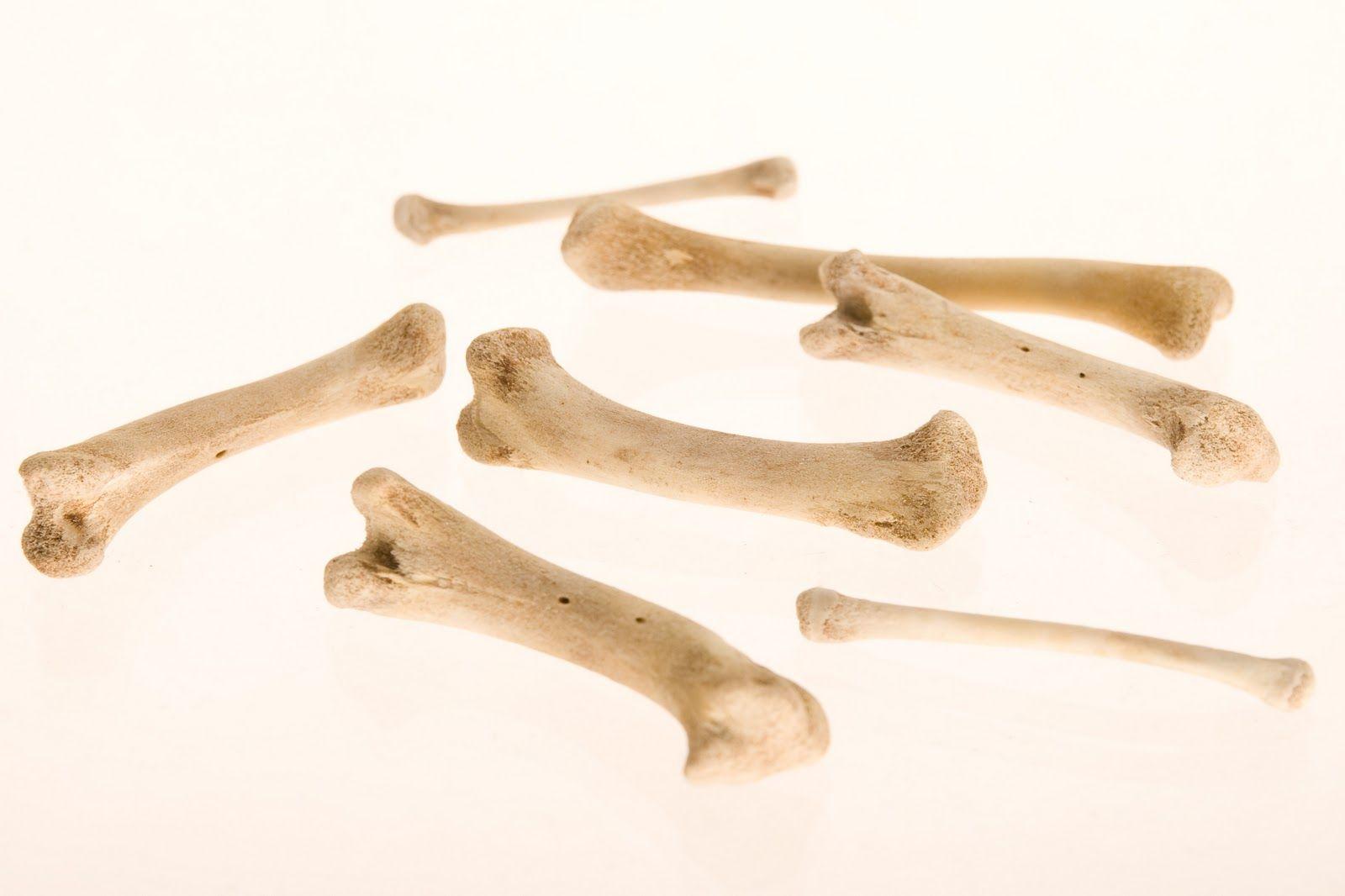 Dinosaur Activities For Kids Milk Bone Dig With Dog