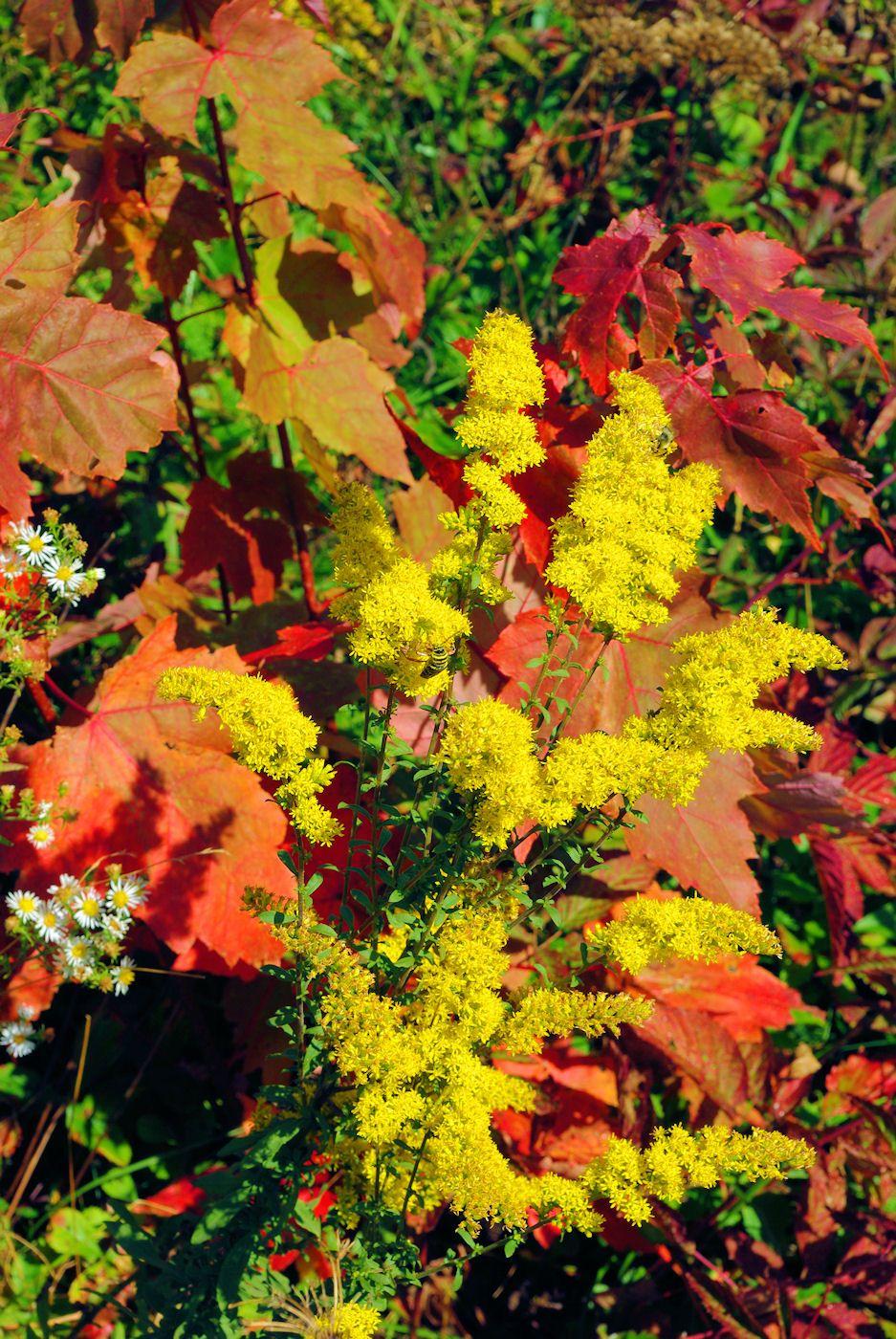 Asheville Nc Fall Foliage Color Leaf Report 2014 Nc Mountains Fall Colors North Carolina Mountains