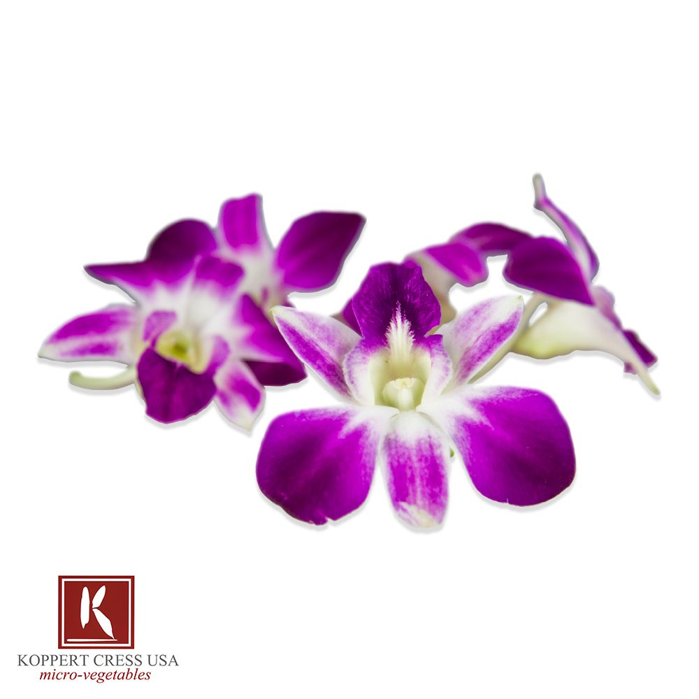 Fresh Karma Orchids Edible Flowers Edible Orchids