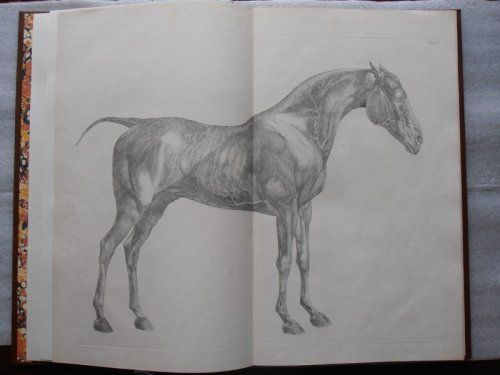 George Stubbs 1853 2nd Edition The Anatomy Of The Horse