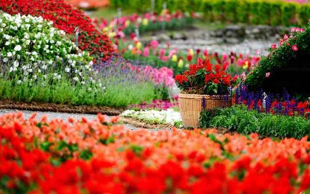 Memorial Service Ideas For The 13 Most Popular Hobbies Beautiful Flowers Garden Garden Pictures Flower Garden Pictures Flower garden background hd images