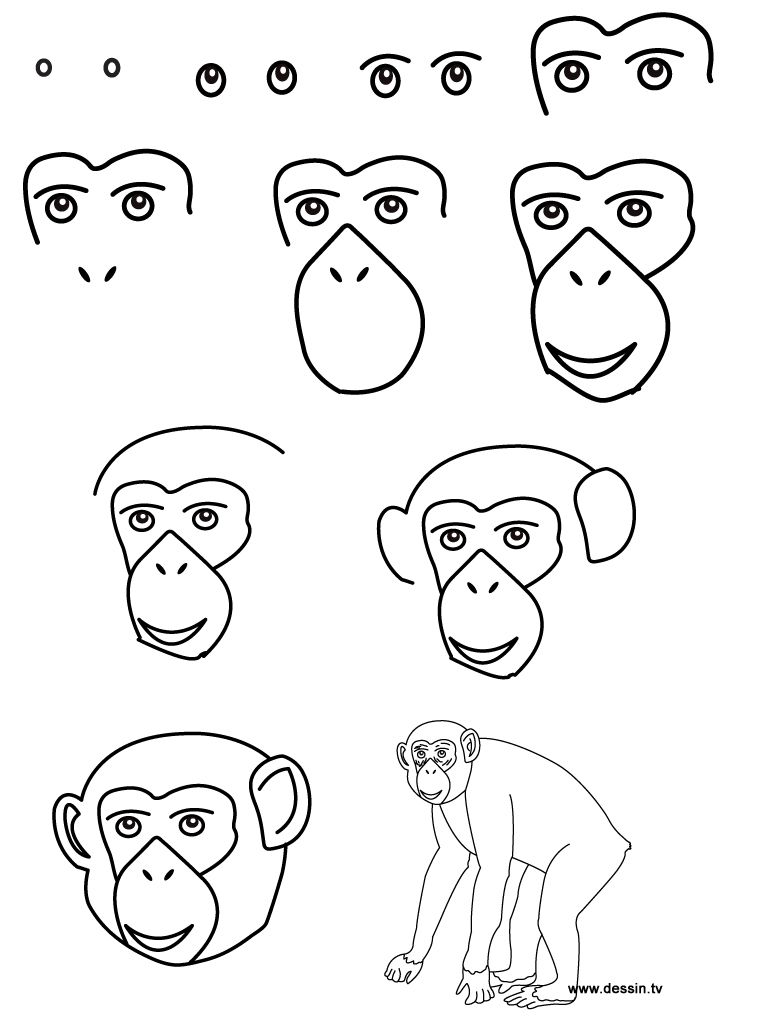 How to draw a chimpanzee on Pinterest