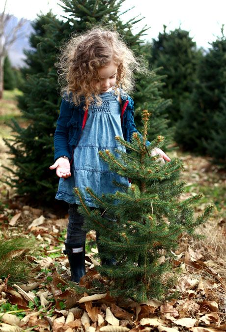 Pin By Christen Mallett On Baby Mallett Christmas Tree Farm Tree Farms Christmas Photography