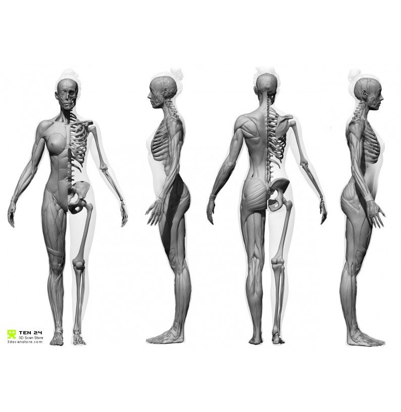 Male And Female Écorché Bundle | anatomy by Святослав Бобрук | Pinterest