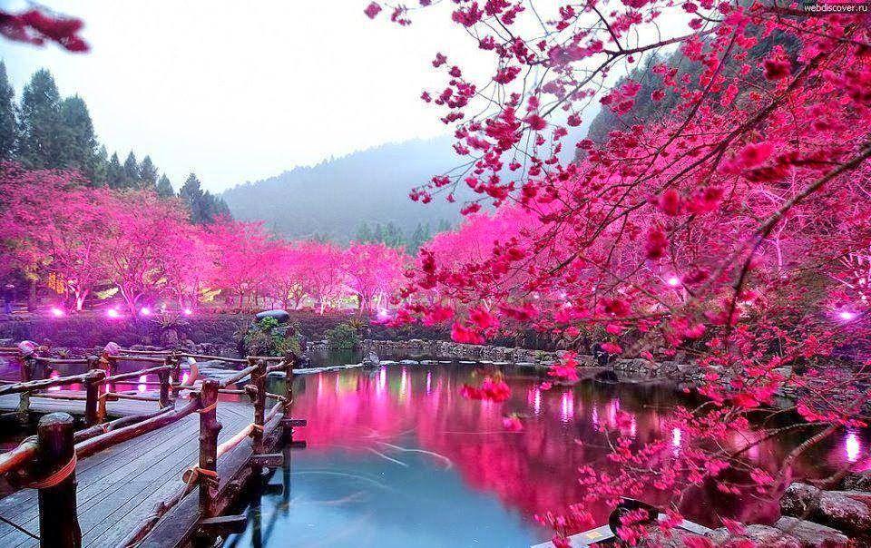 زهر الكرز باليابان مع أجمل صور طبيعة خلابة Wonders Of The World Places Around The World Beautiful Places To Visit