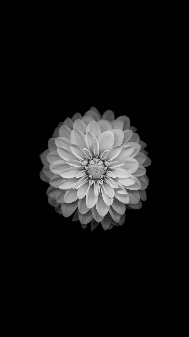 Amoled Wallpapers Imgur Flower Background Iphone Ipod Wallpaper Flower Wallpaper