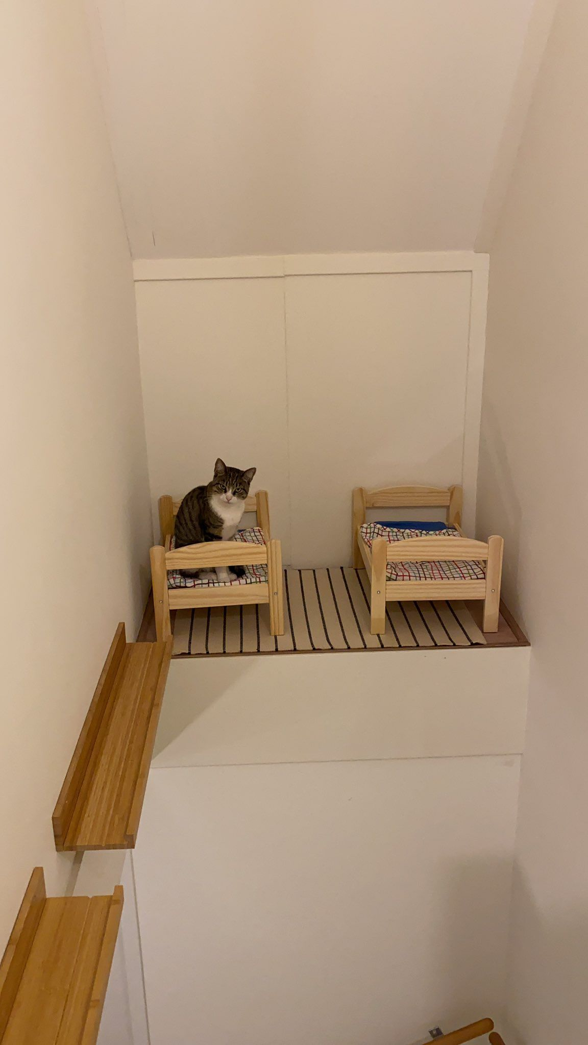 Maud Feijt On Twitter Today We Made Our Cats A Bedroom Cardboard Frames Cats Maud