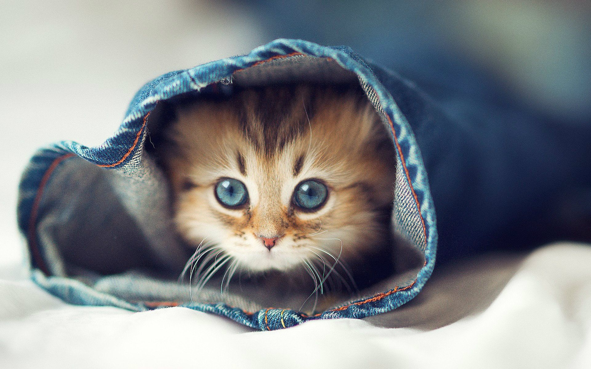 Most Beautiful Cats Wallpapers Hd Photos Images Download Hd Cute Cat Wallpaper Kittens Cutest Cute Animal Pictures
