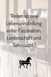 """Photo of Nettes Pferd sagt saying Unsere heutige Quote: """"Reiten ist eine Lebensweise voll …"""