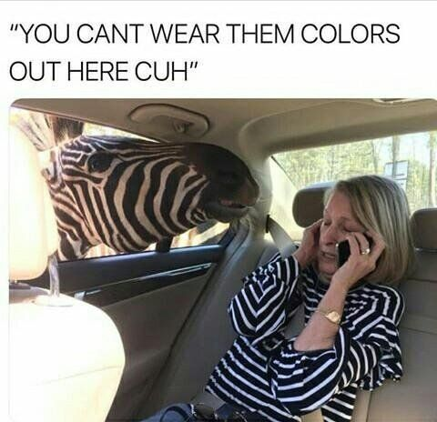 Hilarious Meme Images | Animals memes | Funny pictures | Funny memes | Ironic Life memes