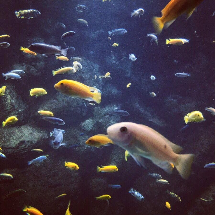 Plenty of fish toronto