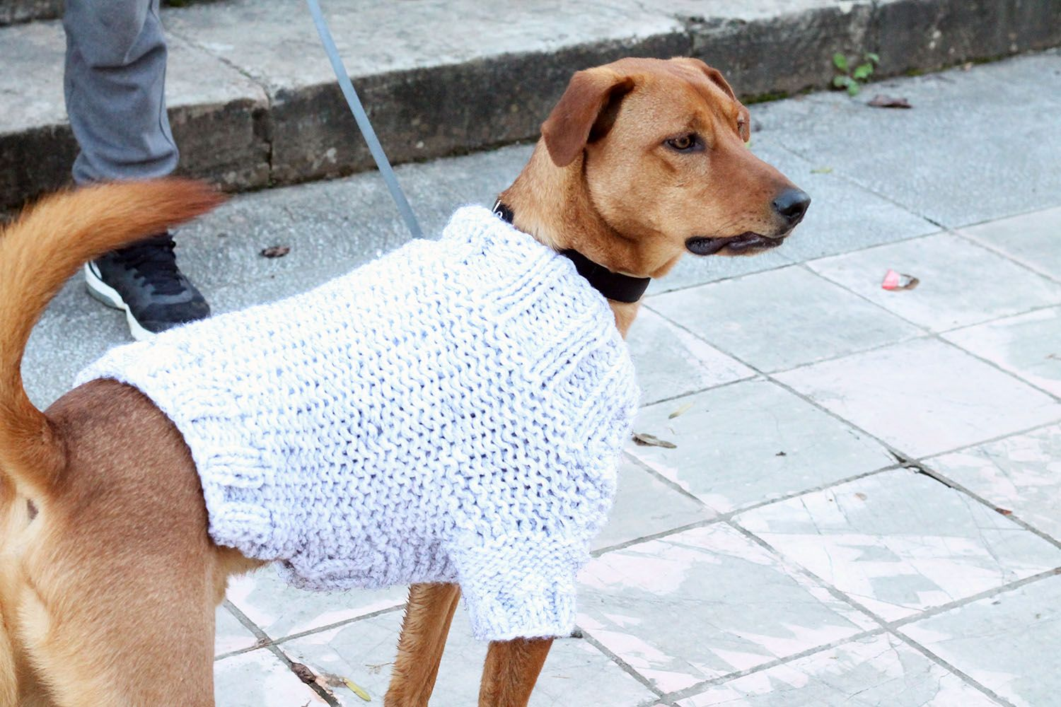 Famous Dog Sweater Knitting Patterns For Beginners Ornament - Sewing ...