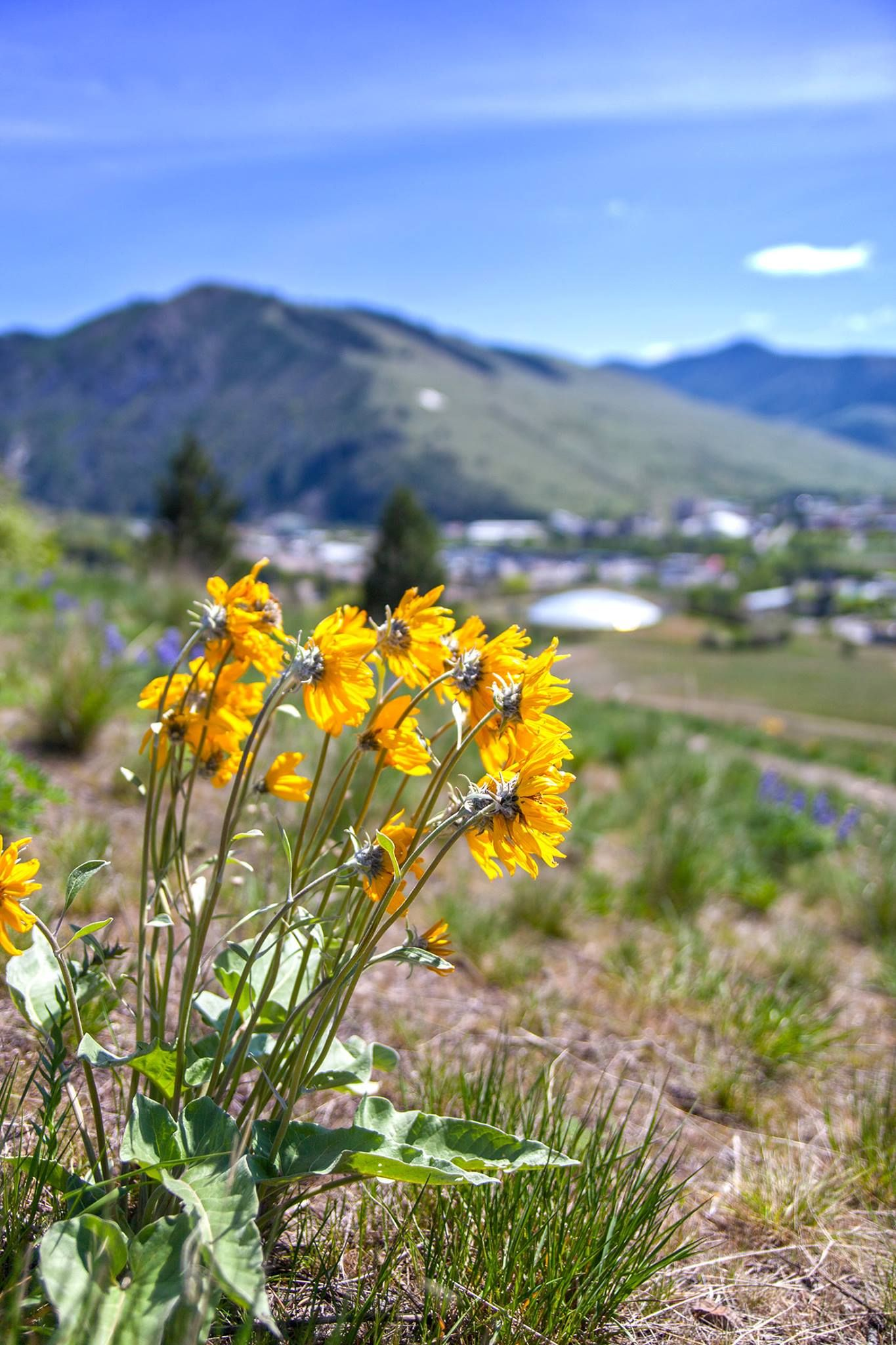 Hiking With Images Missoula Hiking Destinations Hiking