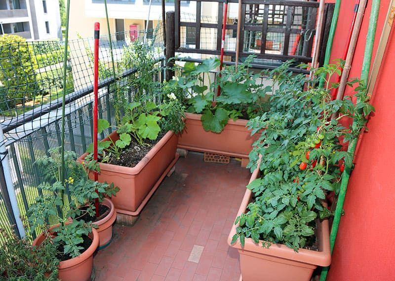 Photo of #balcony 25 Incredible Vegetable Garden Ideas