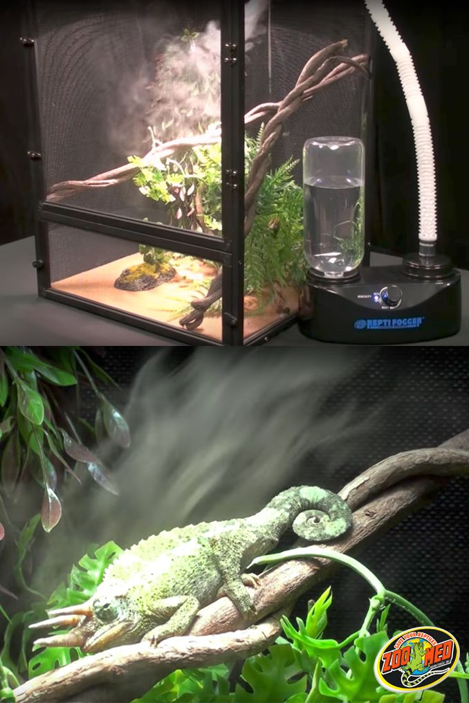 Increase Your Reptile Or Amphibian Terrarium S Humidity