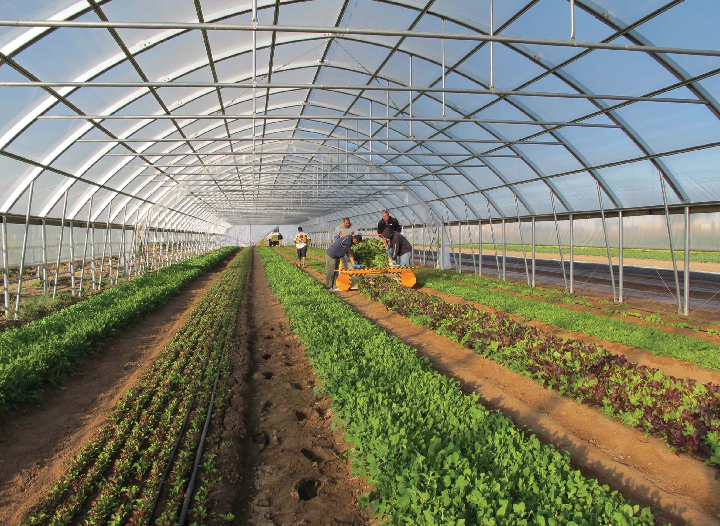 Planning The Planting Layout Of A High Tunnel Greenhouse