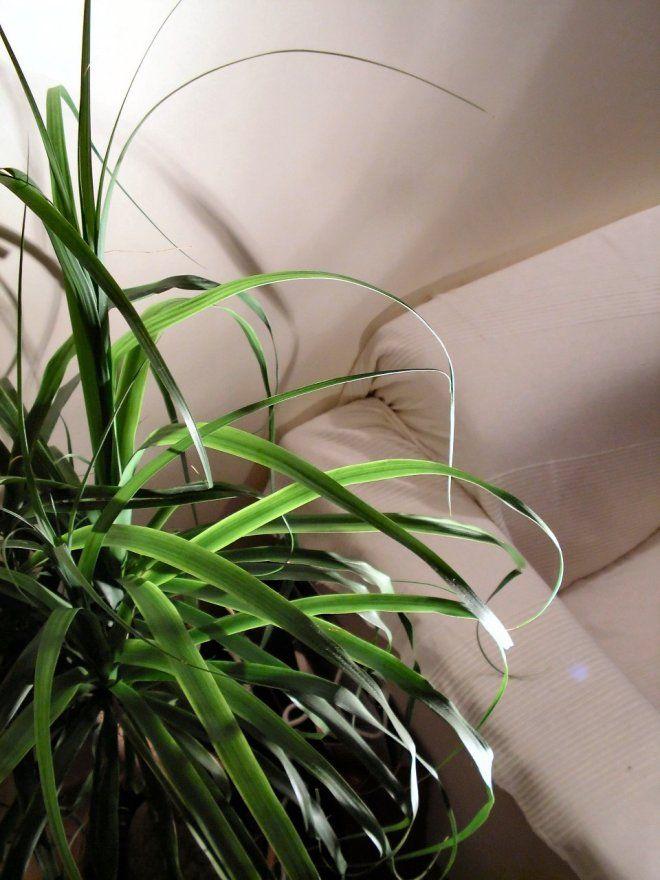 L\'entretien des plantes d\'intérieur