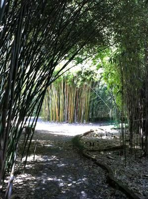Gentil Bamboo Gardens: I Had Seen Photos Of Giant Water Lily Pads In A Brochure  For. Bamboo GardenGainesville FloridaBotanical GardensAcreSunshine ...