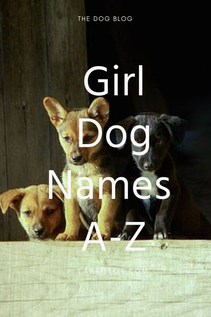 Want to know the best girl dog names from a to z labrotties