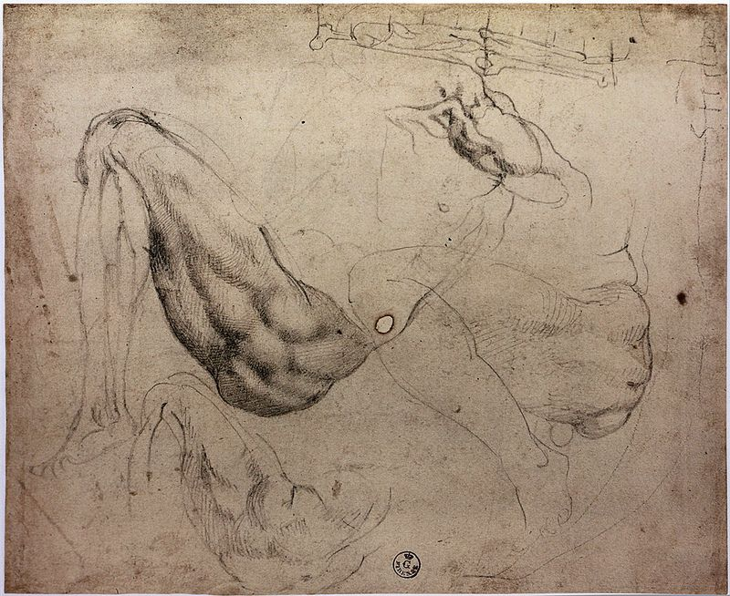 anatomy by Michelangelo --- | Michelangelo, Anatomy and Drawings