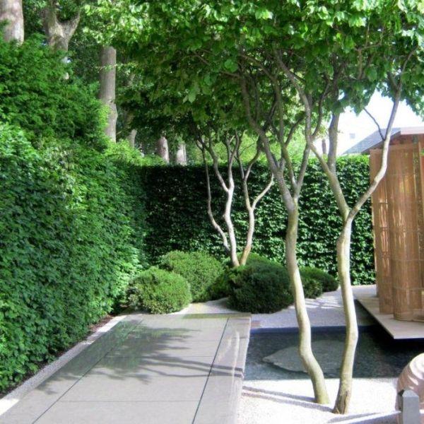 Meerstammige Bomen Tuin Ideeen Pinterest Tuin Tuin Ideeen En