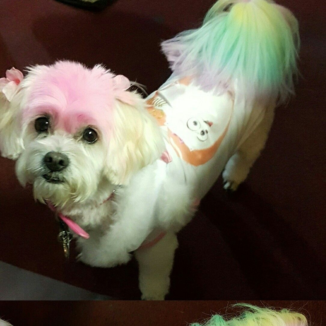 This is my baby. Princess Petsmart did her hair in New