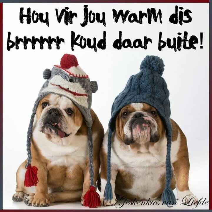 Brrrr Koud French Bulldog Dog Wear Every Dog Breed