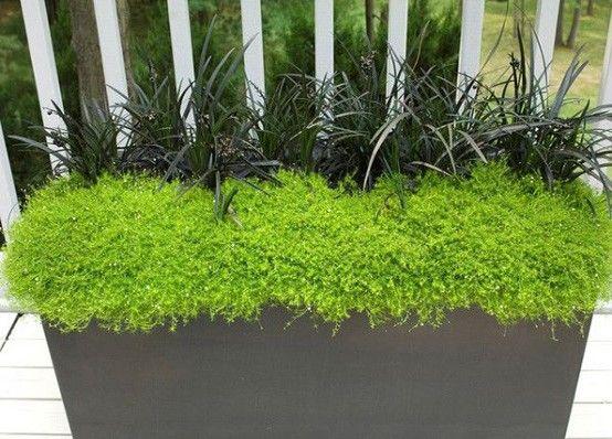 maceta-planta-jardin-exteriores-colgantejpg (554×398) PLANTAS - maceteros para jardin