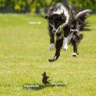 94d88d645cbd8cff130217ddfa1dabf2 doggo memes google search funny stuff pinterest memes