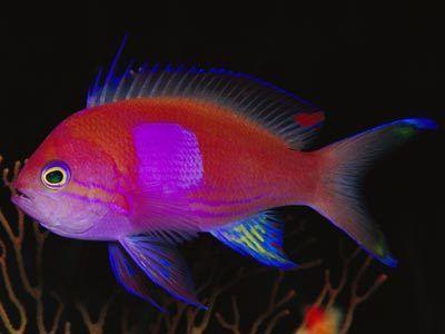 The Oceans Incredible Saltwater Fish Fish Salt Water Fish Beautiful Fish