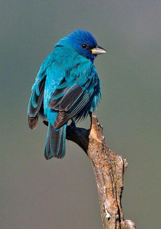 Photo National Geographic Educaiton | Backyard birds ...