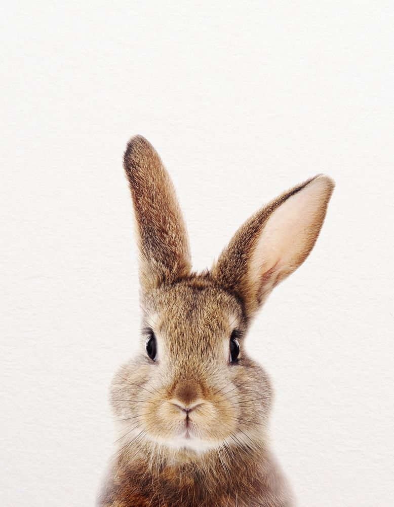 Photo of Baby Rabbit, Baby Animals Art Print By Synplus Mini Art Print by synplus – Without Stand – 3″ x 4″