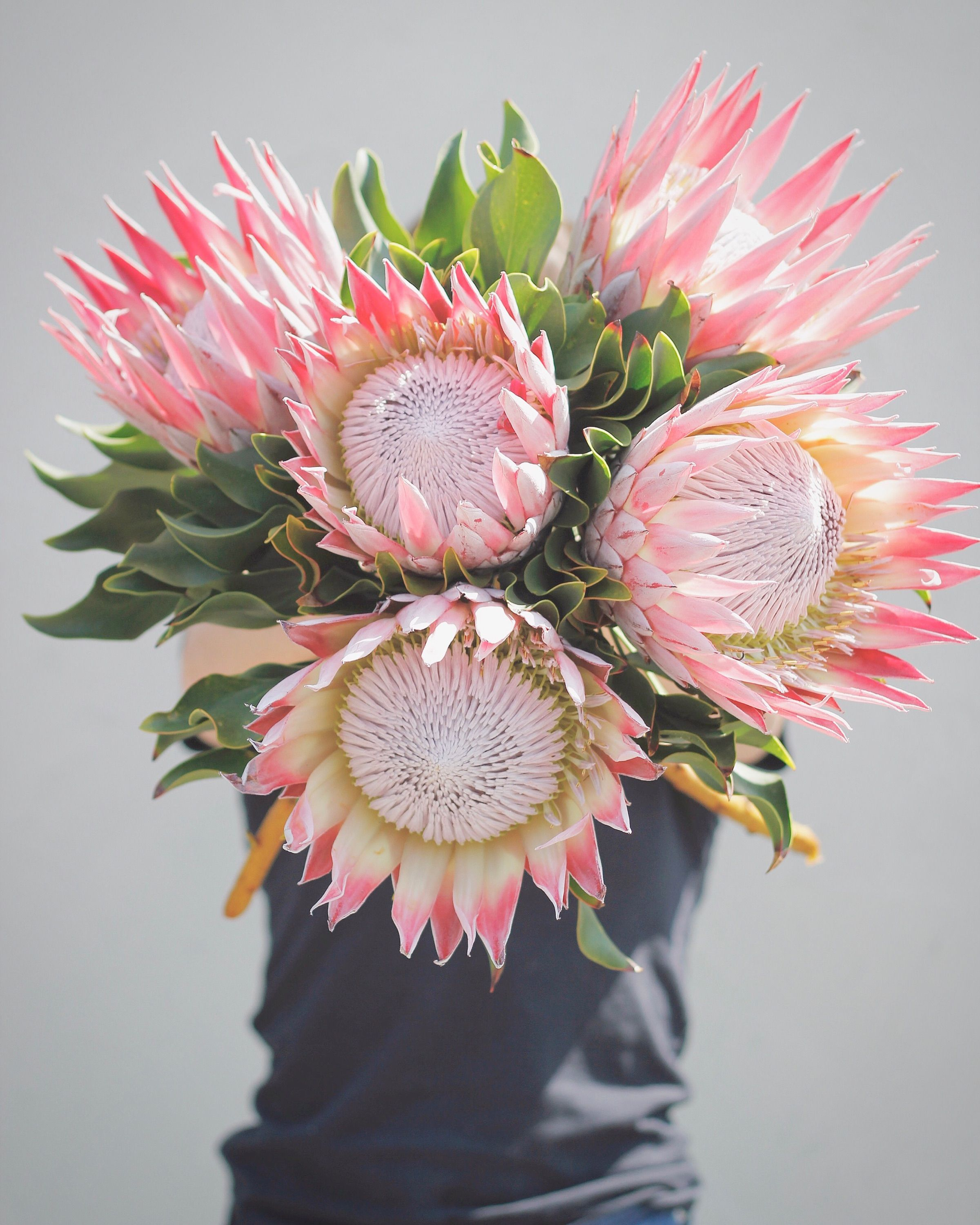 The King Of Proteas Stems Floral Design Productions Austin Wedding And Events Florist Central Texas Flori Light Pink Flowers Pink Flowers Floral Design